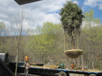 Large Tree Installation Project